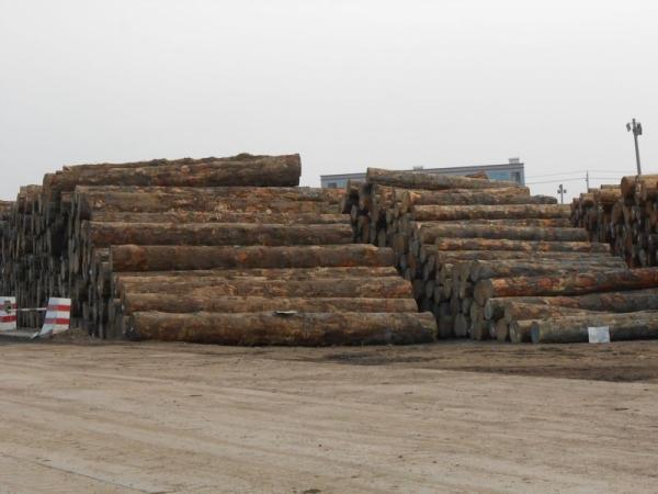 进口原木存货区