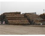 上海进口原木存货区